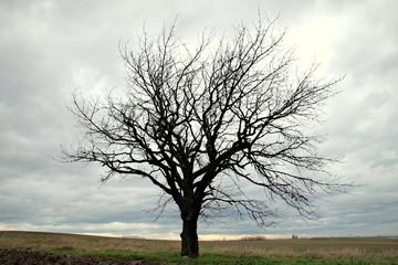 suche drzewo samotne w polu