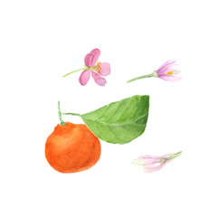 Watercolor set hand drawn fruit orange branch isolated on white. Organic products for the design of healthy food, kitchen, market, menu, textiles