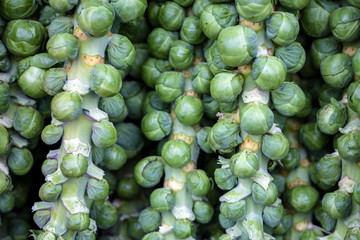 Organic Brussel Sprouts at a Local Farmer's Market