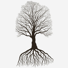 Tree Silhouette with root system . Black bare oak outline. Detailed image. Vector