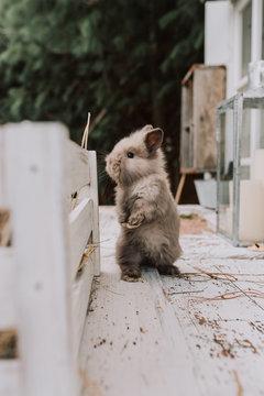 Bunny rabbit sitting outdoors
