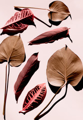 leaves laying in a seamless background