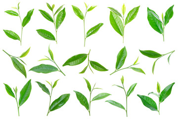 collection of green tea leaf