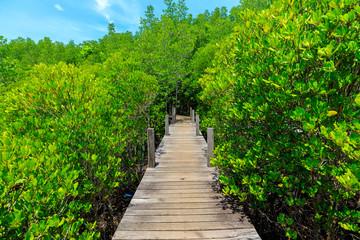 Wooden walkway bridge through mangrove forrest