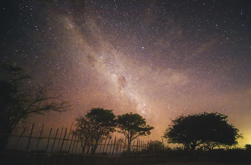 The Milky Way and some trees. In the Nusa Penida Island, Bali, Indonesia