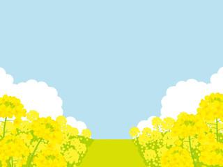 菜の花畑 背景イラスト