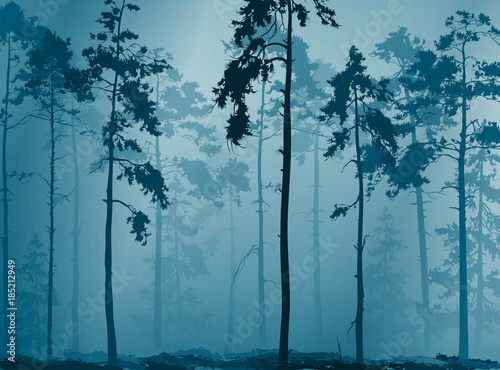Wall mural natural background with a silhouette of a pine forest, vector illustration
