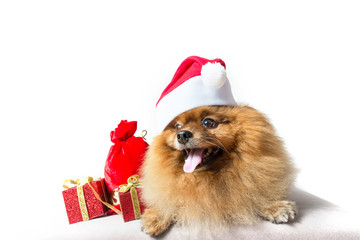 funny dog with christmas decoration