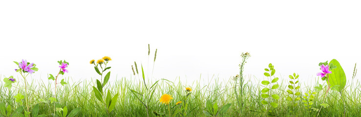 grass and wild flowers  isolated
