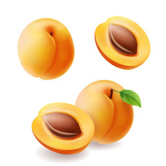 Apricots with leaf and half apricot realistic fruit set. Vecctor