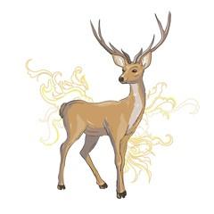 A set of deer for your design. Deer, sika deer and reindeer. Vector illustration, isolation objects.