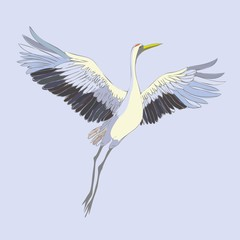 Vector watercolor set of illustrations bird crane. White stork . isolated object