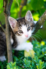 Kitty in the hedge