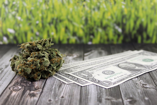Medical marijuana buds with dollar bills