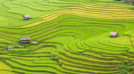 Poster Rice fields Terraced rice field in Northern Vietnam