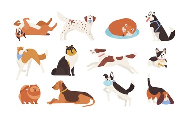 Collection of funny dogs of various breeds playing, sleeping, lying, sitting. Set of cute and amusing cartoon pet animals isolated on white background. Colorful vector illustration in flat style.
