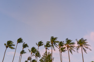Palm trees with beautiful sky