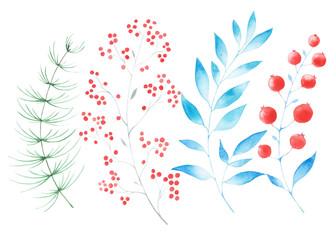 winter twigs berries