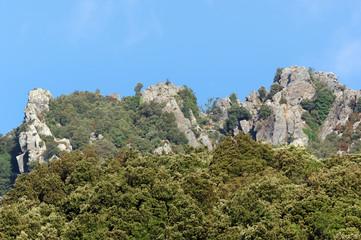 Forêt de châtaigniers et barres rocheuses de costa verde en haute Corse