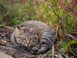 茂みで丸まる猫