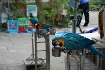 Exotic parrots in Bird Garden in Mong Kok district of Hong Kong