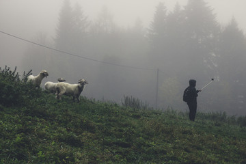 A young girl with a selfie stick photo with the sheep in the fog on a spring meadow