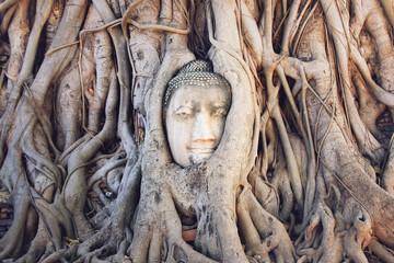 Head of a stone Buddha in the tree roots.  Wat Mahathat, Ayutthaya Historical park. Ayutthaya, Thailand.