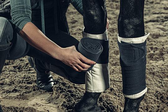 Bandaging horses' legs with a bandage.