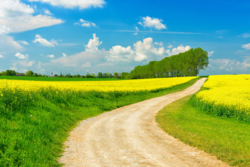 Dirt Road through Spring Landscape with Rapeseed Fields in Full Bloom