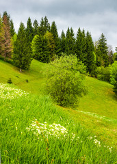 forest on grassy hillside in springtime. lovely nature background