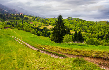 dirt road through grassy slope in rural area. beautiful countryside of Carpathian mountains on an overcast springtime day