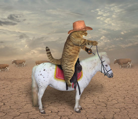 The cat cowboy riding a horse grazes cows.