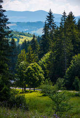 spot of light on some trees in forest. beautiful summer nature scenery of TransCarpathia.