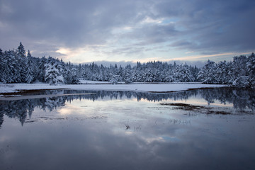Winter water landscape background with beautiful reflection in the water of cloudy sky and idyllic snowy trees, Bloke, flooded field, Slovenia, background for christmas cards, desktop