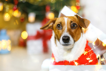 Cute dog near Christmas tree. Holiday concept.