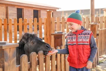 Cute little boy feeding pony in zoo