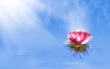 magic lotus flower on the water
