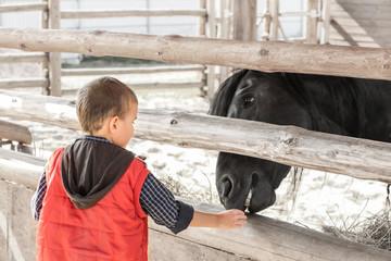 Little boy feeding horse in zoo