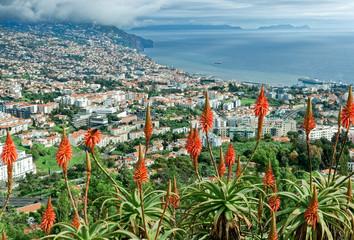 Madeira - Funchal - Ilhas Desertas Fototapete