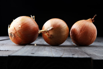 Large onion harvest Bulb onion is rich in vitamins, useful spring.