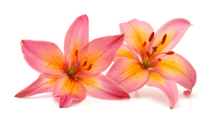A lily flower decorating