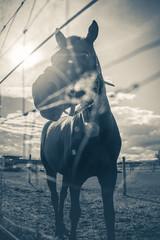 Horse at a farm