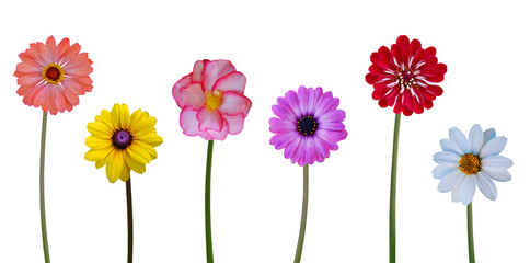 Collection flowers on white background