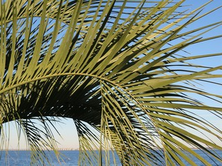 Palm tree on river background