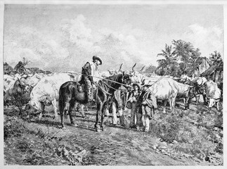 Ancient oxen trader makes business leading his herd to pasturage. Garibaldi trading oxen. By E. Matania published on Garibaldi e i Suoi Tempi Milan Italy 1884