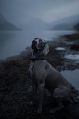 Dog by a lake