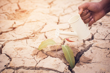 Hands of boy watering little green plant on crack dry ground, concept drought and save the world