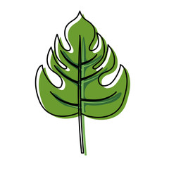 philodendron  leaf  vector illustration