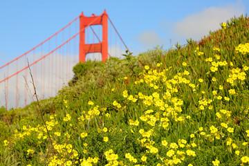 Golden Gate Bridge with yellow wildflowers