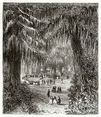 Little group of people having good time between two enormous cypresses in a awesome forest. Montezuma bald cypresses wood in Chapultepec Mexico. By Riou published on Le Tour du Monde Paris 1862